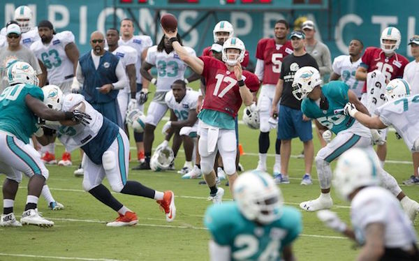 Dolphins_Preview_2208
